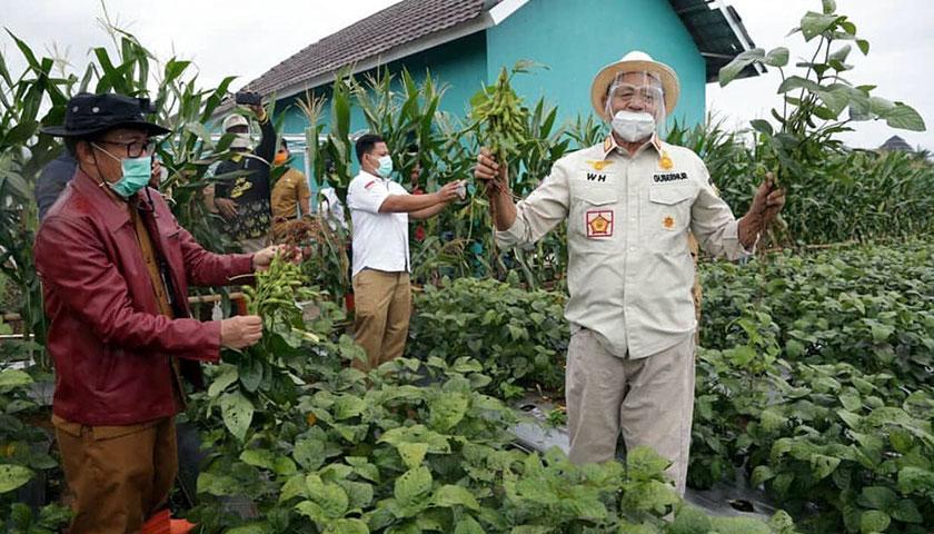 Pemprov Banten Genjot Produksi Kedelai